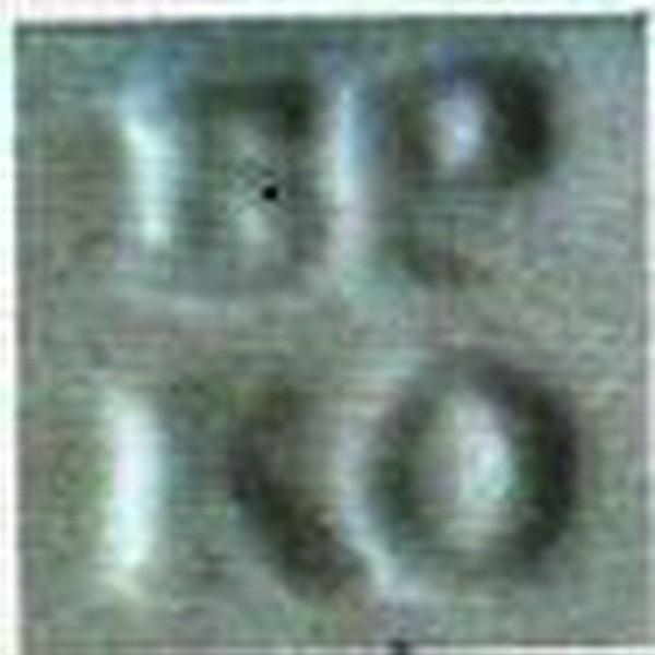 1835-1843гг. Тисненная в массе.